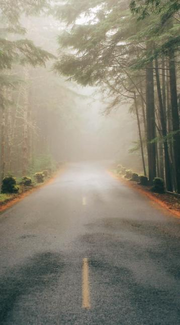 empty road in a foggy forest